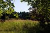 Tyler Arboretum1496