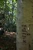 Tyler Arboretum1461