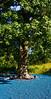 Tyler Arboretum1504