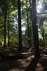 Tyler Arboretum1494