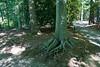 Tyler Arboretum1492