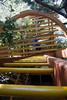 Tyler Arboretum1438