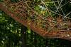 Tyler Arboretum1451