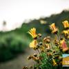 UC Berkeley Botanical Garden_028