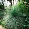 UC Berkeley Botanical Garden_034