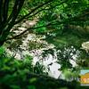 UC Berkeley Botanical Garden_026