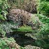 UC Berkeley Botanical Garden_025