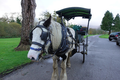 Jaunting Car Ride_Kilarney_Ireland_GJP01817
