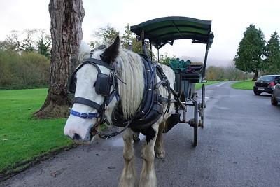 Jaunting Car Ride_Kilarney_Ireland_GJP01817