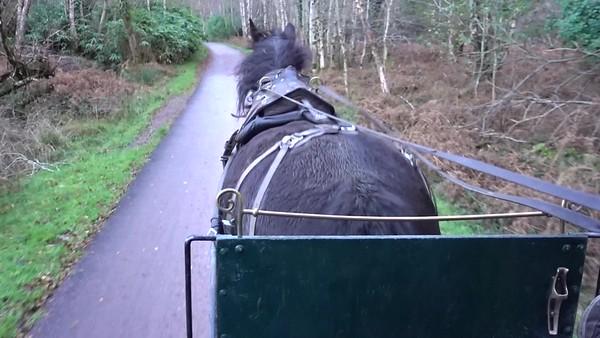 Jaunting Car Ride_Kilarney_Ireland_MAH01801