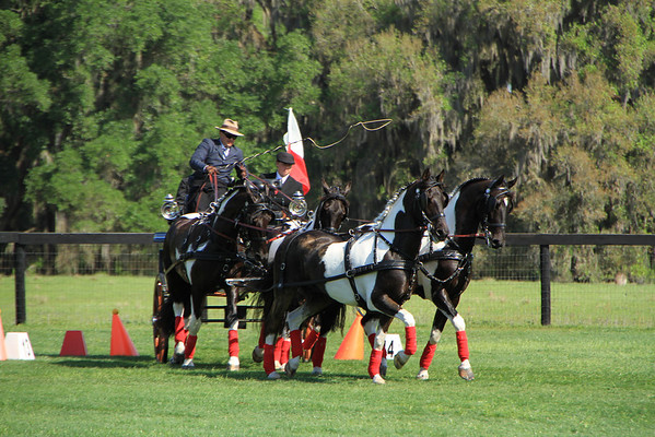 US Equestrian Federation Nat'l Championships for Horse Pairs and Ponies
