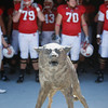 Oct 9, 2010; Raleigh, NC, USA; [CAPTION] prior to the game at Carter-Finley Stadium.  Mandatory Credit: Brian Utesch-US PRESSWIRE