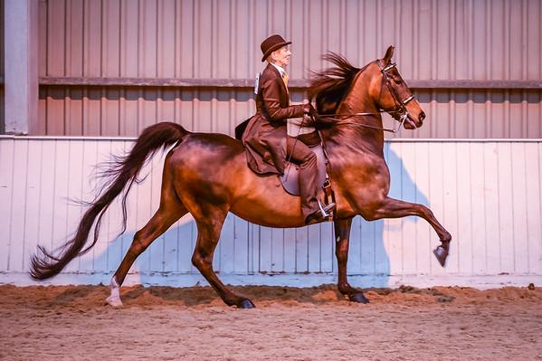 Class 34 ( Morgan Pleasure Saddle)