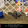 NAC_Day1_12Warmups_Sheltie5