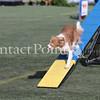 Cyno_2012_Sunday-3506