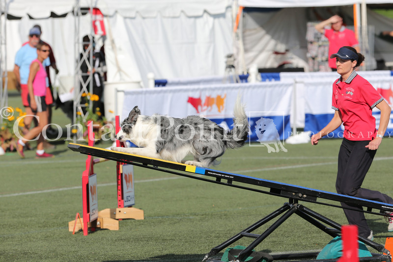 Cyno_2012_Sunday-3602