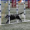 Cyno_2012_Thurs-0906