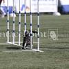 Cyno_2012_Thurs-0891