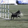 Cyno_2012_Thurs-0892
