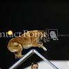 Cyno_2012_Sat-0227