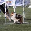 Cyno_2012_Sunday-1694
