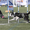 Cyno_2012_Sunday-1661