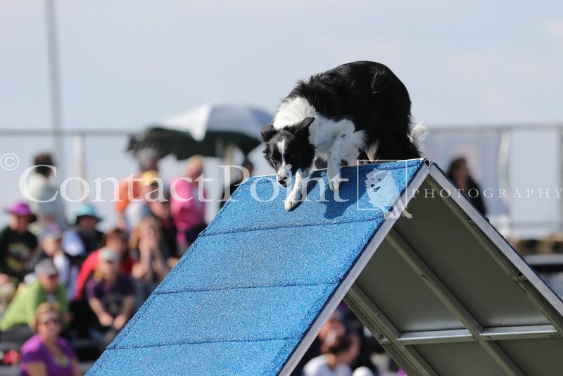 Cyno_2012_Sunday-1619