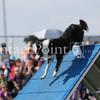 Cyno_2012_Sunday-1645