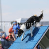 Cyno_2012_Sunday-1704