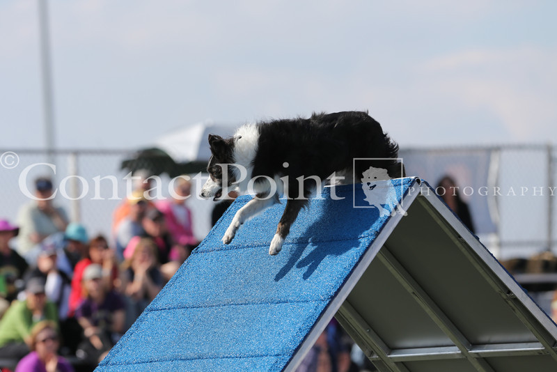 Cyno_2012_Sunday-1644