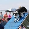 Cyno_2012_Sunday-1726