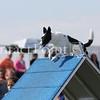 Cyno_2012_Sunday-1733