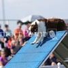 Cyno_2012_Sunday-1482