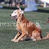 Cyno_2012_Sunday-1557