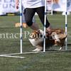 Cyno_2012_Sunday-1697