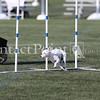 Cyno_2012_Sunday-1464