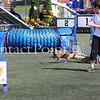 Cyno_2012_Sunday-2168