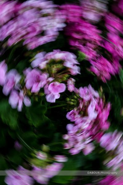 Sammon Swirl on flowers