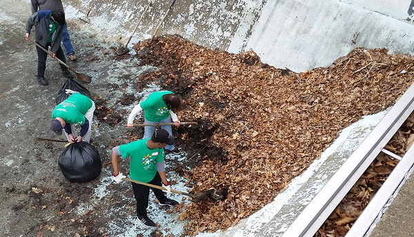 Volunteers from Comcast dig into a nearly 12-foot-high pile of leaves as part of local United Way efforts to restore the former Cascade Park swimming pool.