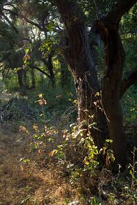 Black Oaks at Blue Sky Reserve