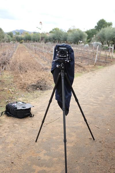 Tachihara at Bernardo Winery