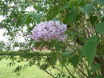 VA visit  April 2006