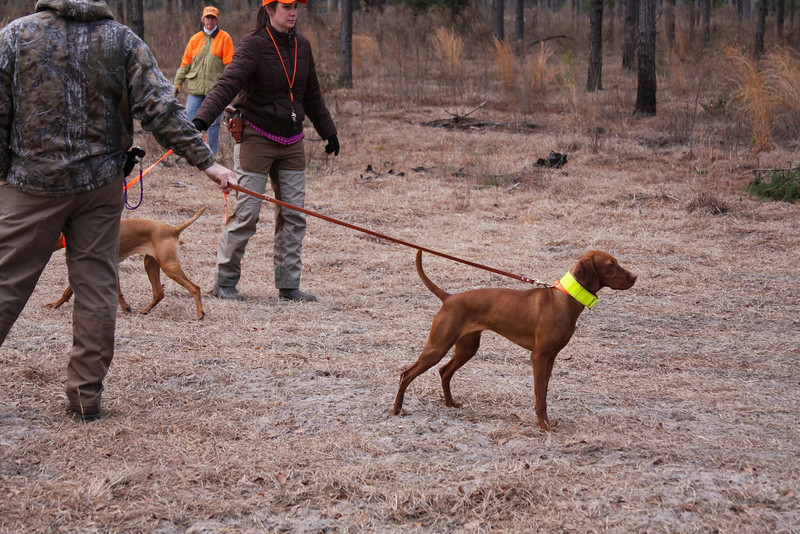 "Broad Run's Cayenne Blazin' Killian ""Caiya"" (Orange collar) and WindDance Cool Hand Lucille ""Lucy"" (Yellow collar)"