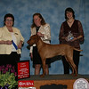 KY'S WYNN'N CELTIC COPPER - 1st Place (Bred by Exhibitor Dog)