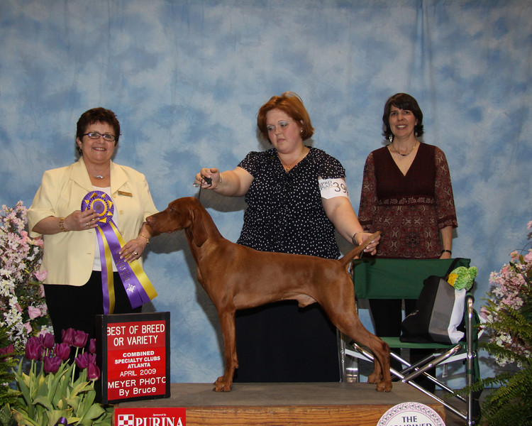 CH ANNIAN'S GONE WITH THE WIND JH - Best of Breed (Best in Specialty)