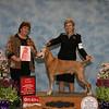 CH KALLMEE THE MYTHMAKER CD RN - 1st Place (Veteran Dog 9-11 years)