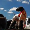 """Dixie's Dangerous Poindexter """"Dexter"""" (Photo by Dagmar Nelson)"""