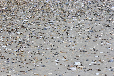 Pieces of shells on the beach at the campgrounds