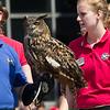 Owl from World Bird Sanctuary