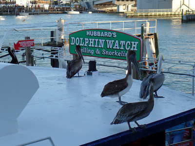 Birds watching for Dolphins